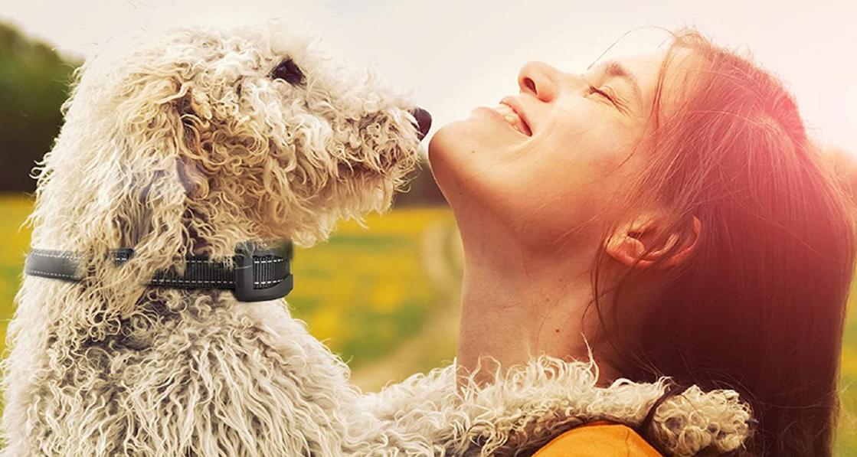Comment dresser son chien avec un collier anti aboiement