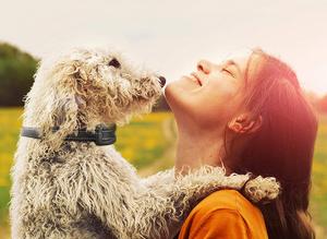 Dresser son chien avec un collier anti aboiement